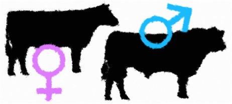 assam sexed semen cattle dairynews