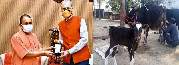Dutch will train dairy farmers in UP dairynews7x7