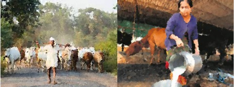 animal husbandry need market linkage dairynews7x7